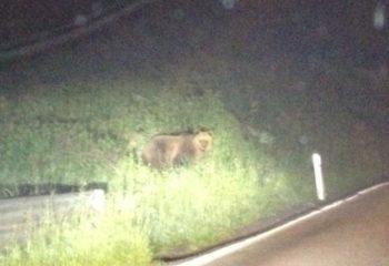L'orso ad Ardesio