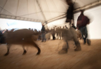 Ardesio: Fiera delle Capre 2013
