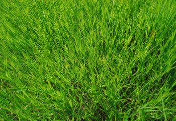 Ardesio: Giornata del Verde Pulito