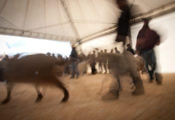 Ardesio: Fiera delle Capre e dell'Asinello 2014