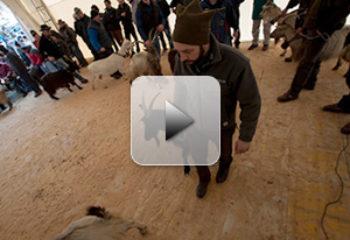 Ardesio: Fiera delle Capre 2014